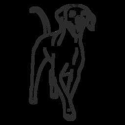 Curso de cão feliz weimaraner