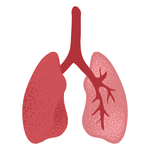 Lungs textured