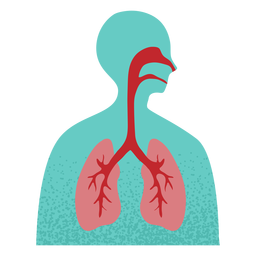 Respiratory system textured
