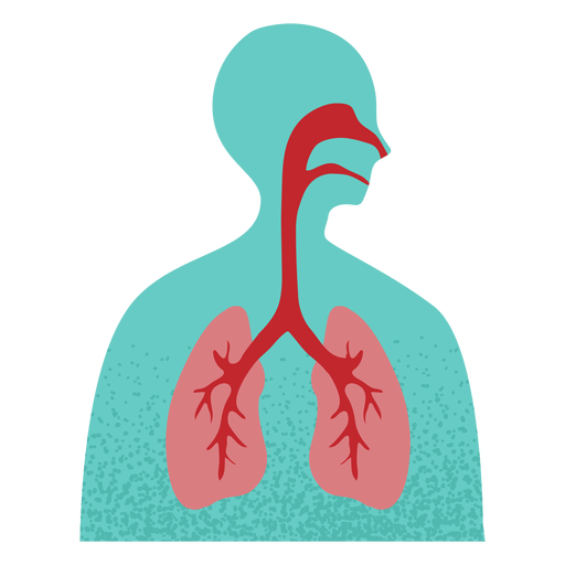 Respiratory system textured