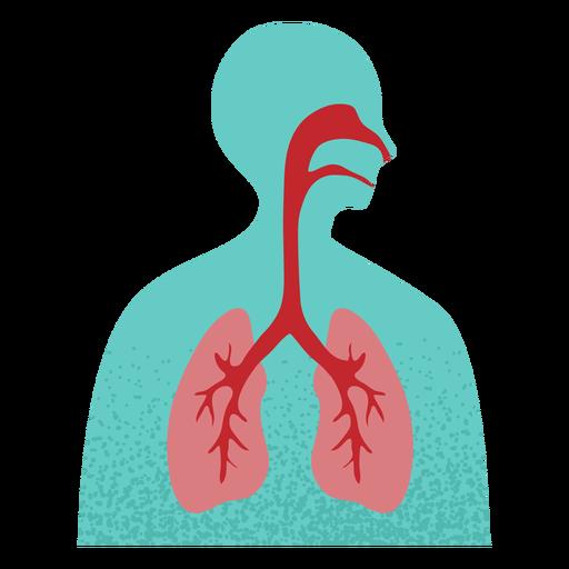 Sistema respiratorio texturizado Transparent PNG