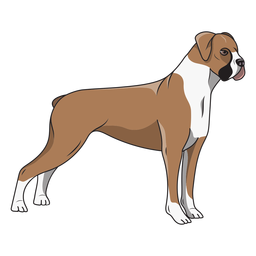Side boxer dog illustration