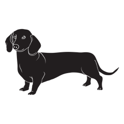 Side dachshund dog black