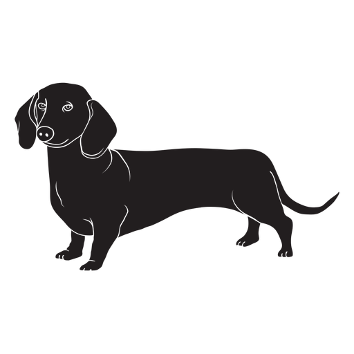 Side dachshund dog black