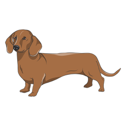 Side dachshund dog illustration