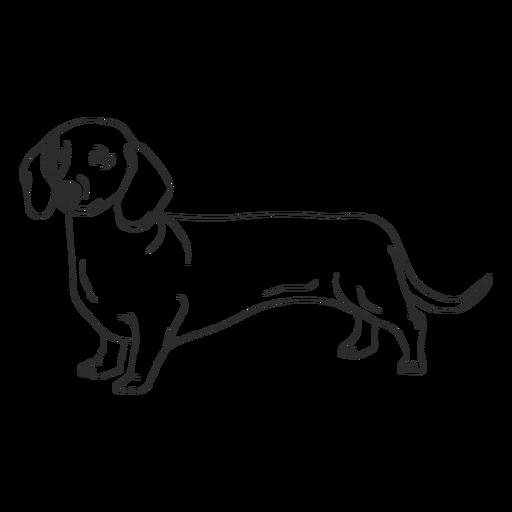 Side dachshund dog stroke