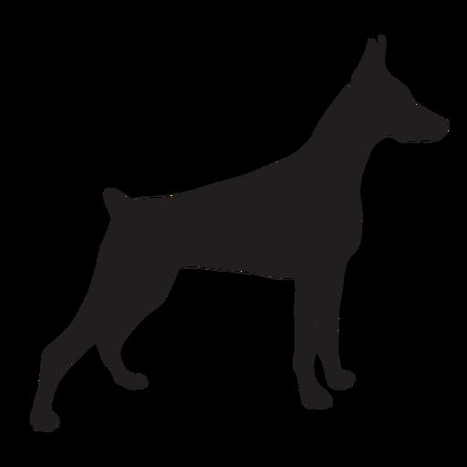 Side doberman dog black
