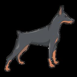 Ilustração do cão doberman lateral