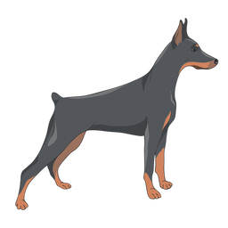Side doberman dog illustration