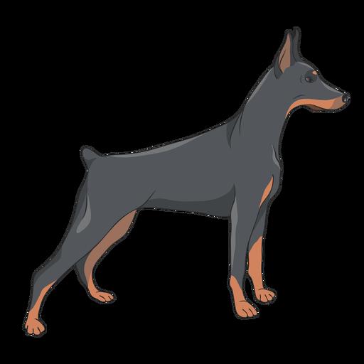 Side doberman dog illustration