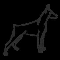 Golpe lateral de perro doberman
