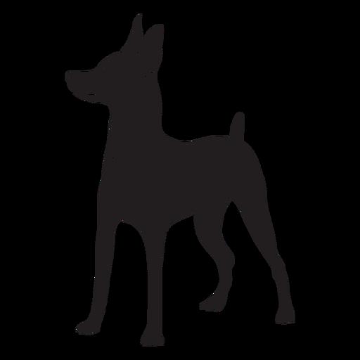 Side pinscher dog black
