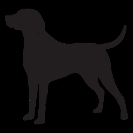 Side weimaraner dog stroke