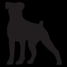 Perro boxer de pie negro
