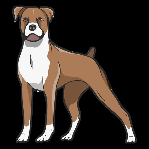 Standing boxer dog illustration