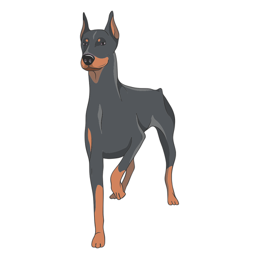 Standing doberman dog illustration