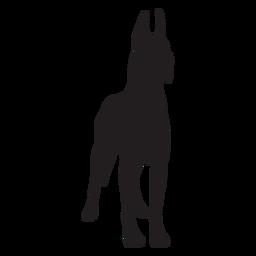 Perro gran danés de pie negro