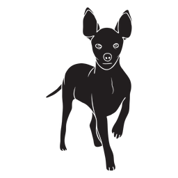 Standing pinscher dog black
