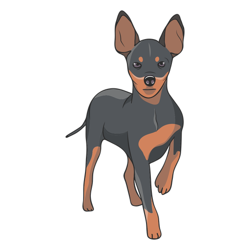 Standing pinscher dog illustration Transparent PNG