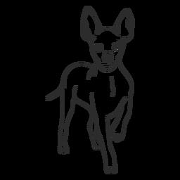 Standing pinscher dog stroke
