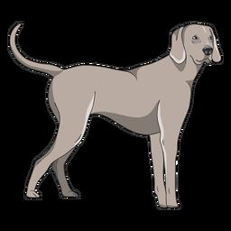 Standing weimaraner dog illustration