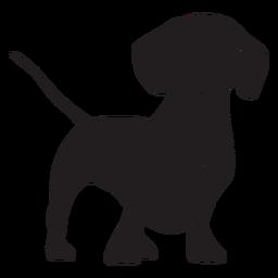 Stansing perro salchicha negro