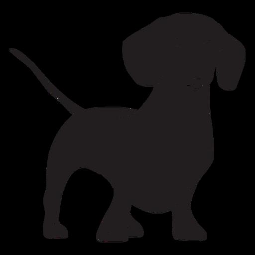 Stansing dachshund dog black