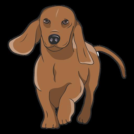 Walking dachshund dog illustration