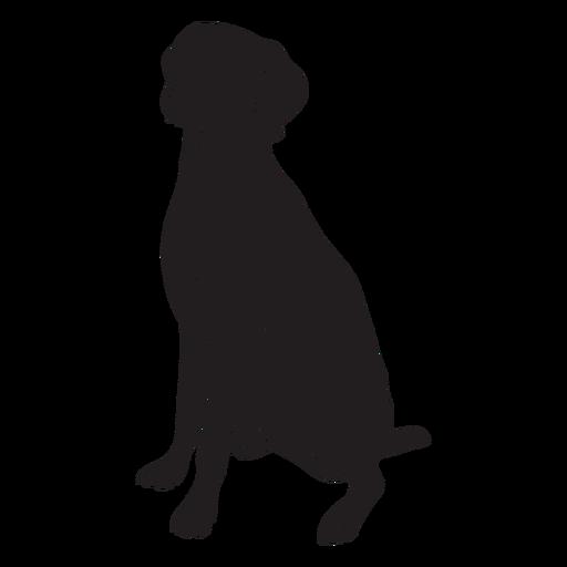 Weimaraner dog black