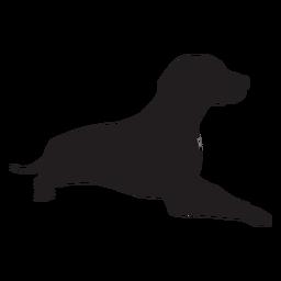 Weimaraner dog lying down black