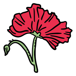 Closed poppy flower hand drawn