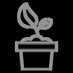 Pflanze im Topfhub