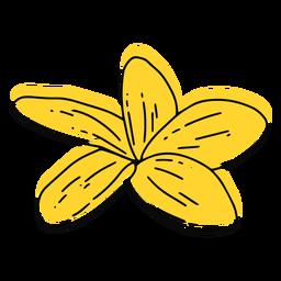 Plumeria Blume flach