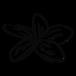 Trazo de flor de plumeria