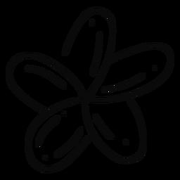 Plumeria flower stroke flower