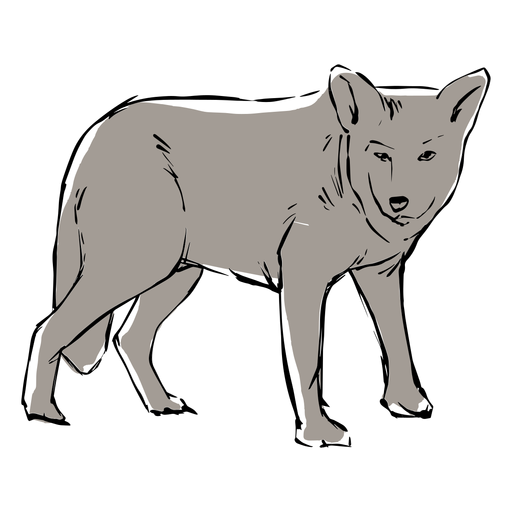 Young Wolf Sketch Transparent Png Svg Vector File