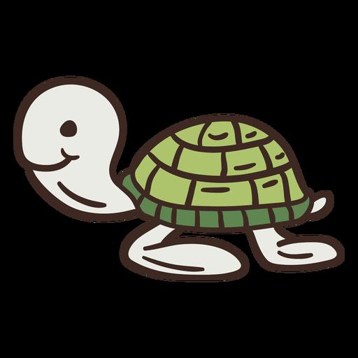 Lindo animal tortuga