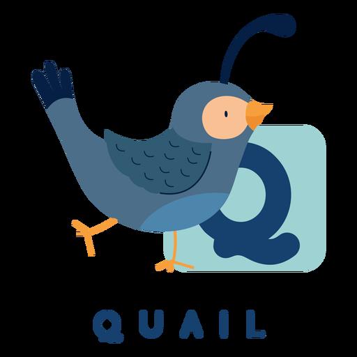 Letter q quail alphabet Transparent PNG