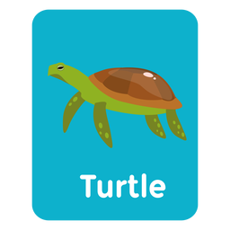 Turtle vocabulary flashcard