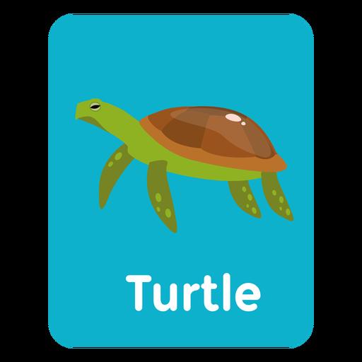 Tarjeta de vocabulario de tortuga