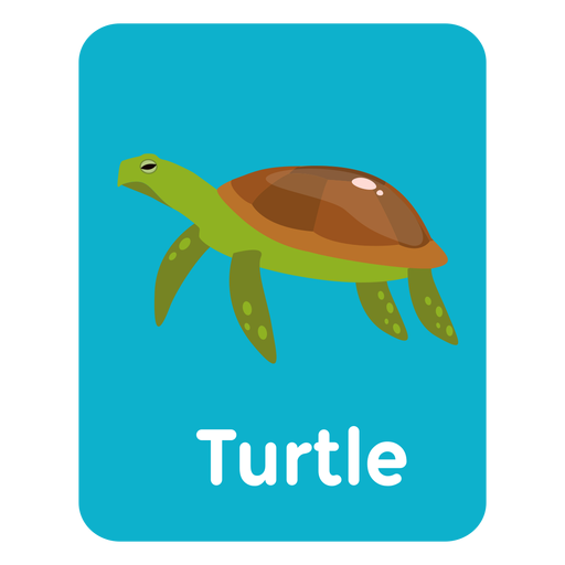 Turtle vocabulary flashcard Transparent PNG