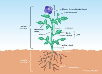 Flower Plant Anatomy Design