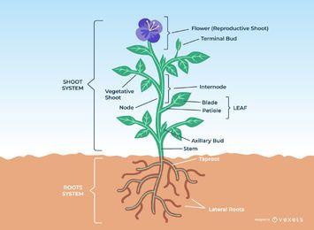 Projeto da anatomia da planta da flor