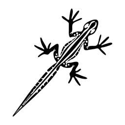 Geko top view stylish black