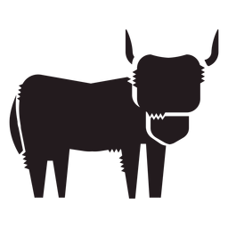 Highland cattle animal black