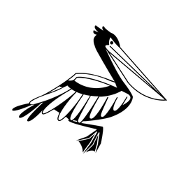 Pelican nadando elegante negro