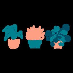 Lindas plantas de interior planas