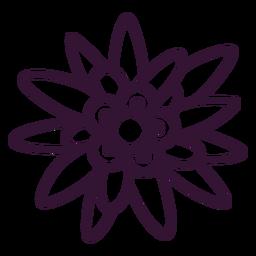 Curso de flor de Edelweiss