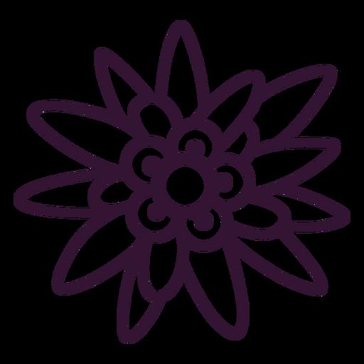 Edelweiss flower stroke