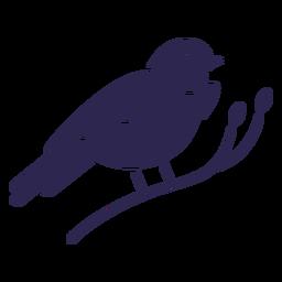 Mountain bluebird bird black